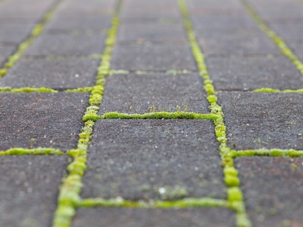 Pressure cleaning pavers